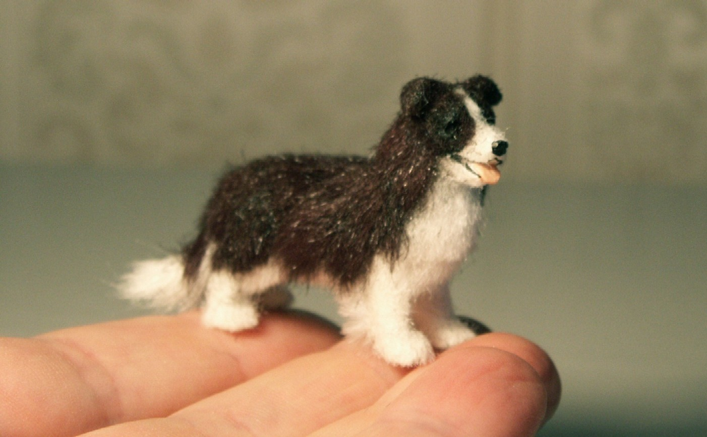 24th scale border collie for the dolls house